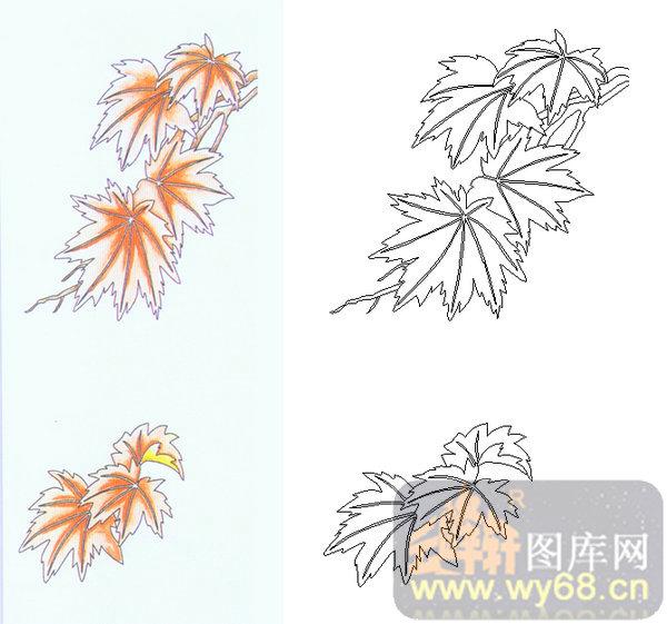 枫叶简笔画手绘图片