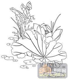 荷花1-白描图-荷叶-hehua034-荷花白描线描图图片