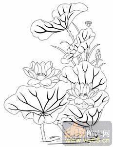 荷花1-小学图-鸳鸯莲花-hehua077-荷花白描图方程数学白描列图片