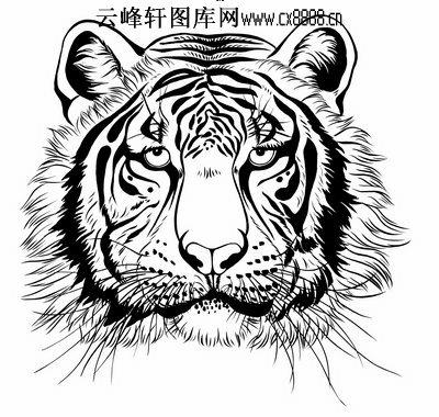 虎第五版-白描图-虎头-30-老虎线描图