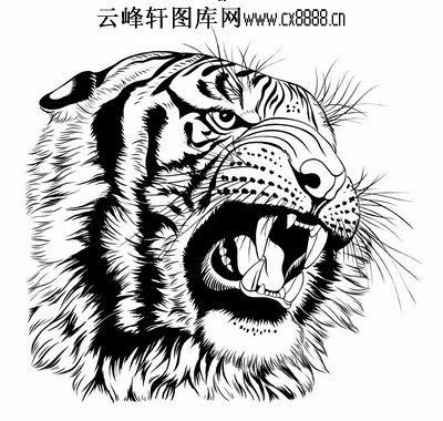 虎第五版-白描图-猛虎下山-35-老虎白描图