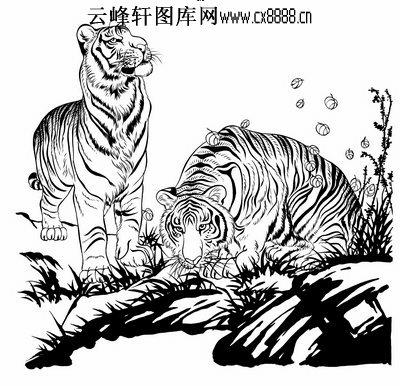 虎第五版-白描图-双虎-37-老虎白描线描图