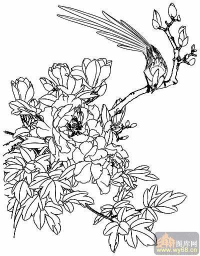 工笔白描牡丹画-国色天香-mdbm011-白描牡丹图案花开富贵-矢量图-引得