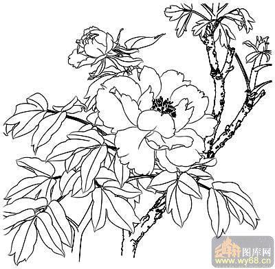 牡丹白描画稿-白描图-花团锦簇-15-牡丹雕刻图片