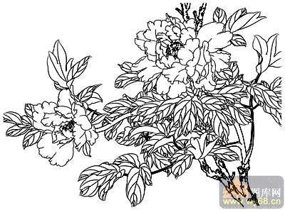 牡丹白描画稿-白描图-花团锦簇-47-牡丹线描图