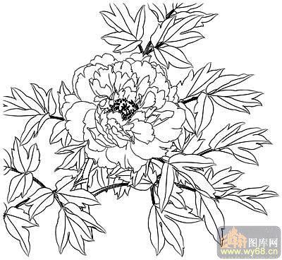 牡丹白描画稿白描图花团锦簇15牡丹雕刻图片线描