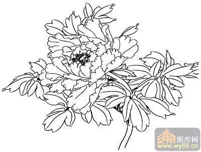 工笔白描牡丹画-14醉露-中国白描牡丹