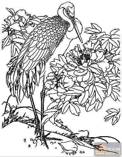 牡丹富贵-白描图-仙鹤牡丹-16-牡丹白描图