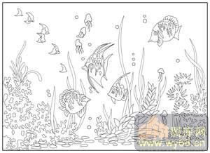 热带鱼图片