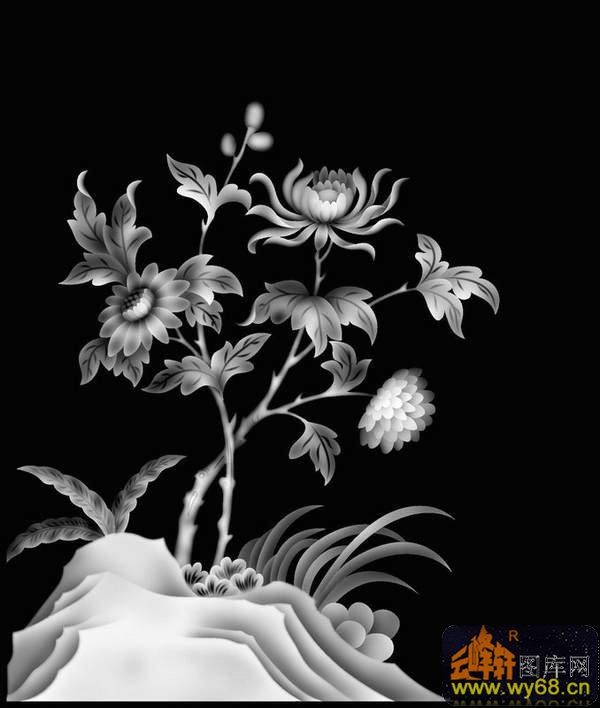 菊花-灰度图库素材