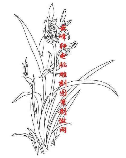 梅兰竹菊-矢量图-兰草-mlxj128-矢量梅兰竹菊