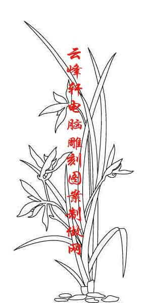 花开富贵-矢量图-艳溢香融-35-矢量牡丹