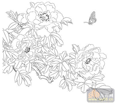 工笔白描牡丹画-矢量图-3艳溢香融-国画牡丹