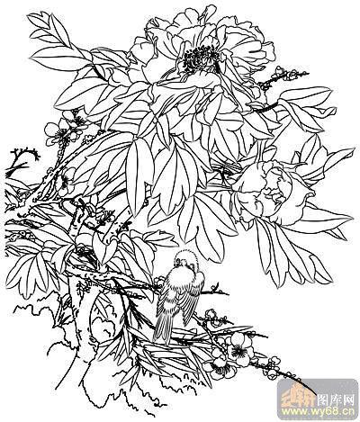 花开富贵-矢量图-鸟语花香-11-牡丹刻绘图