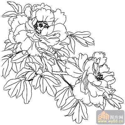 牡丹白描画稿-矢量图-吐蕊-30-牡丹刻绘图