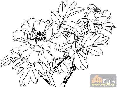 牡丹白描画稿-矢量图-天香凝露-71-牡丹雕刻图