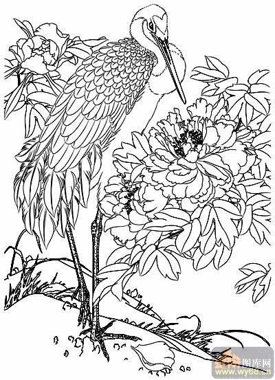 花开富贵-矢量图-仙鹤牡丹-36-路径牡丹图片
