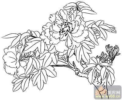 花开富贵-矢量图-燕子牡丹-15-路径牡丹图片