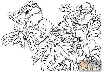 牡丹白描画稿-矢量图-国色天香-51-牡丹雕刻图