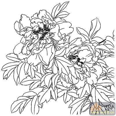 牡丹白描画稿-矢量图-醉露-6-牡丹雕刻图