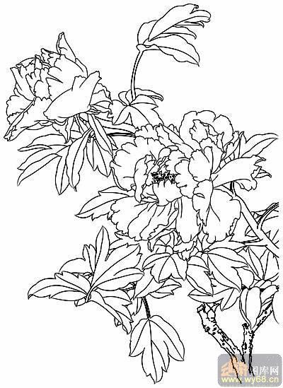 牡丹白描画稿-矢量图-香中有酒-29-路径牡丹图片