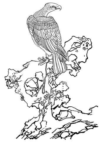 雄鹰图片大全 手绘