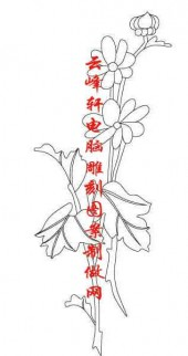 梅兰竹菊-白描图-菊花-mlxj027-梅兰竹菊国画白描