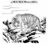 虎第五版-白描图-虎视眈眈-40-老虎全图