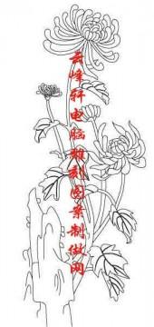 梅兰竹菊-白描图-菊花-mlxj055-梅兰竹菊雕刻图片