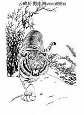 虎第五版-矢量图-龙翔虎跃-14-虎路径图