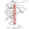梅兰竹菊-矢量图-兰草 南瓜-mlxj006-梅兰竹菊雕刻图