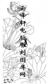 白描仙鹤-矢量图-荷花仙鹤-15-仙鹤全图