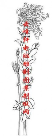 梅兰竹菊-白描图-菊花-mlxj020-梅兰竹菊雕刻图片