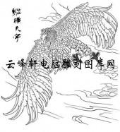 名家画鹰-矢量图-b9纵横天宇-鹰刻绘图