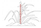 梅兰竹菊-白描图-兰花-mlxj036-梅兰竹菊白描图