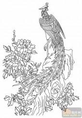 凤-白描图-丹凤朝阳-huangf007-凤图片