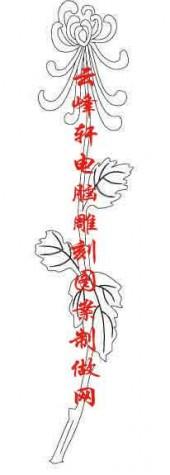 梅兰竹菊-白描图-菊花-mlxj035-梅兰竹菊白描线描图