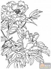 牡丹白描画稿-矢量图-春色满园-4-路径牡丹图片