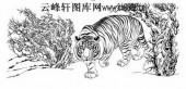 虎第五版-矢量图-龙��虎攫-6-虎雕刻图片