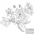工笔白描牡丹画-国色天香-mdbm011-白描牡丹图案
