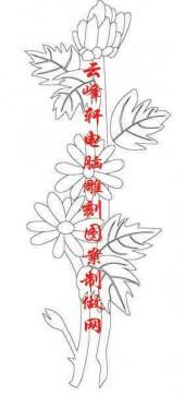 梅兰竹菊-白描图-菊花-mlxj040-梅兰竹菊全图