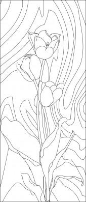 竖板12,郁金香