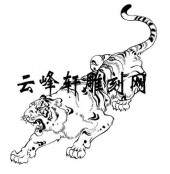 虎2-矢量图-虎背熊腰-48-虎矢量图