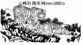 虎第五版-矢量图-燕颔虎须-13-虎路径图