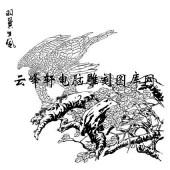 名家画鹰-矢量图-c羽翼生风-名家画鹰图片