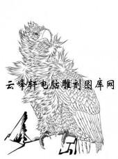 名家画鹰-矢量图-9苍穹图-鹰刻绘图