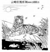 虎第五版-矢量图-溪边猛虎-38-电子版虎