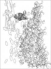 横版7,花鸟