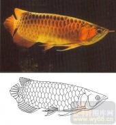 05肌理雕刻系列样图-龙鱼-00208-玻璃门