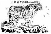 虎第五版-矢量图-鹰扬虎视-20-路径矢量图